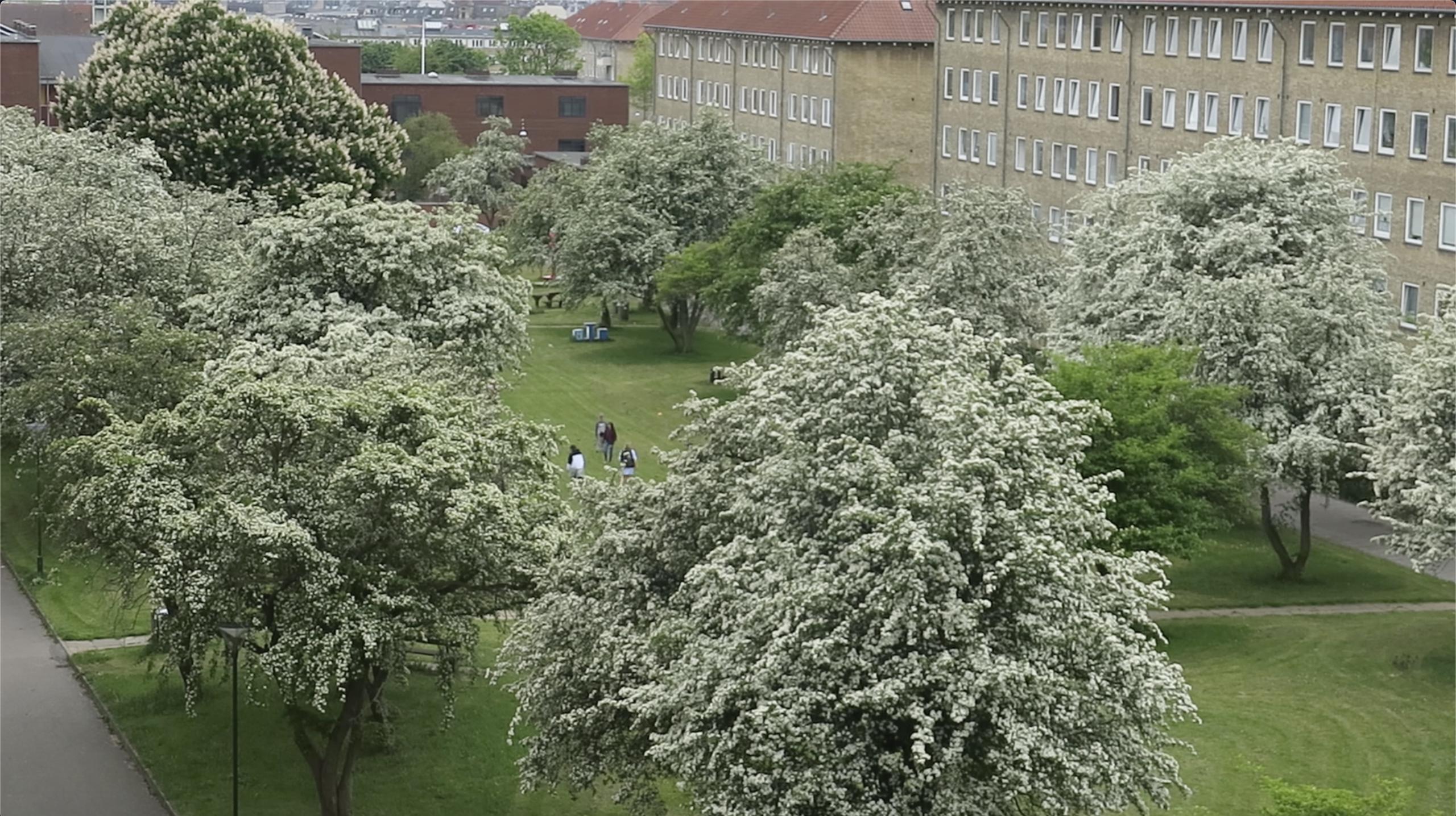 Blomstrende træer på græsplæne