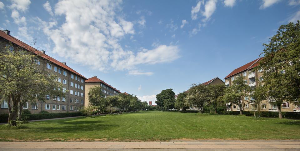 Foto af grøn park under blå himmel